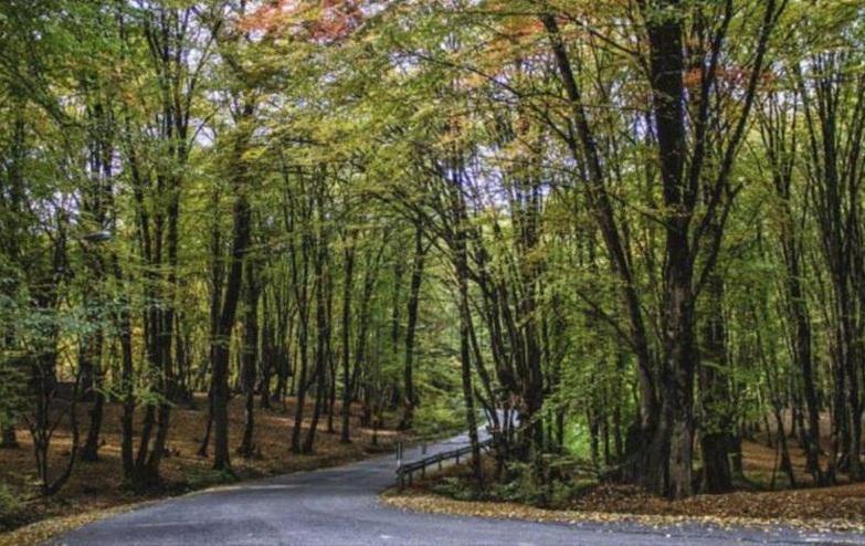 پارک های جنگلی کشور به دلیل کرونا تعطیل شد