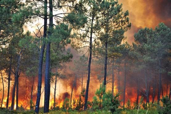 غفلت مسئولان از فناوری های ایرانی برای مهار آتش جنگل های کهگیلویه و بویراحمد ، از محصولات نانو تا راکت اطفای حریق